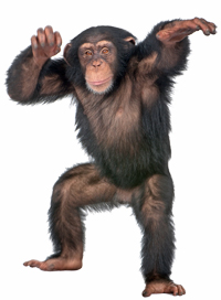 cool_chimp