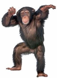 cool_chimp