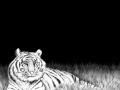 Bengal Tiger 02